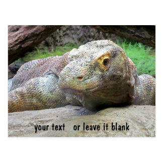 Komodo Dragon face with your text Postcard