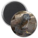 Komodo Dragon Licking 2 Inch Round Magnet