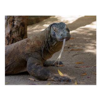 Komodo Dragon Licking Post Cards