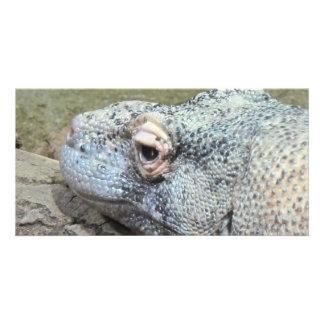 Komodo Dragon Photo Cards