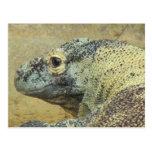 Komodo Dragon Post Card