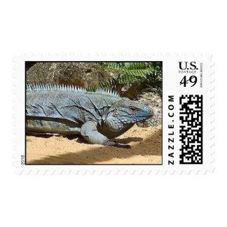 Komodo Dragon Postage Stamp