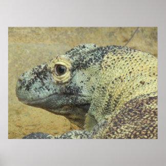 Komodo Dragon Posters