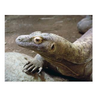 Komodo Profile Postcard