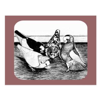 Komorner Tumbler Quartet Post Cards