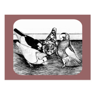Komorner Tumbler Quartet Postcard