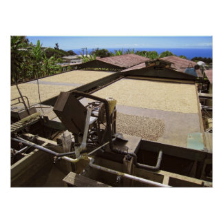 KONA COFFEE BEANS DRYING IN THE SUN - HAWAII POSTER