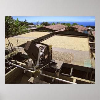 KONA COFFEE BEANS DRYING IN THE SUN - HAWAII POSTER