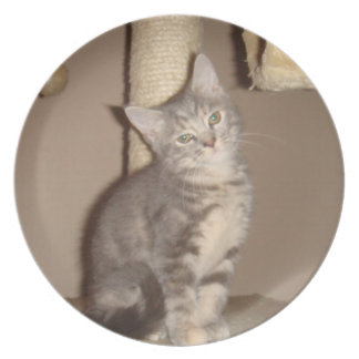 Konfoozled Kitty Plate