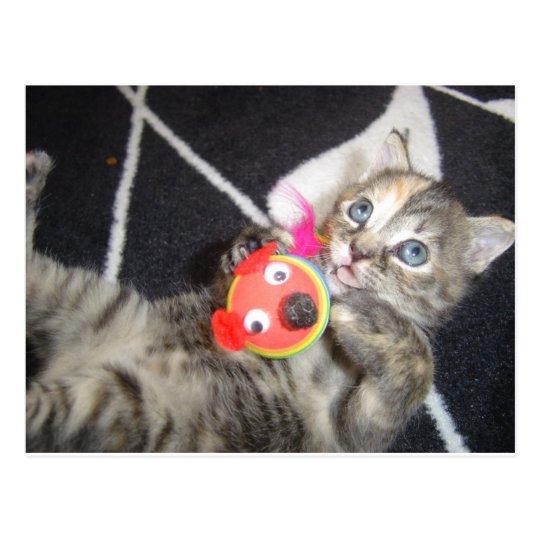 Konfoozled Kitty Postcard