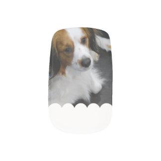 kooikerhondje-3.jpg minx® nail wraps