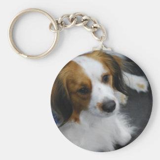 Kooikerhondje Dog  Keychain