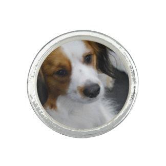 Kooikerhondje Dog Ring