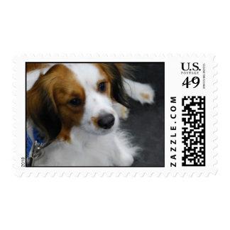Kooikerhondje Dog Postage Stamp
