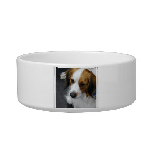 Kooikerhondje  Puppy Pet Bowl