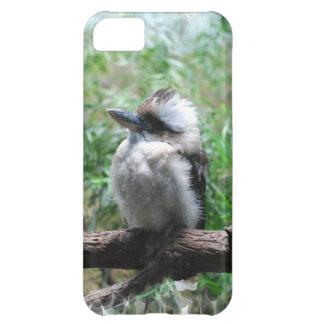 kookaburra-17.jpg