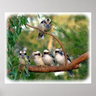 Kookaburra 9Y172D-004 Poster