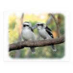 Kookaburra 9Y179D-037 Postales