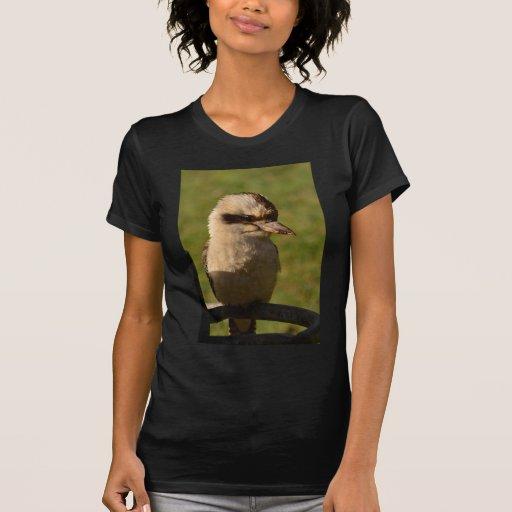 kookaburra camisetas