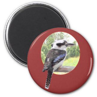 Kookaburra in Circle 2 Inch Round Magnet