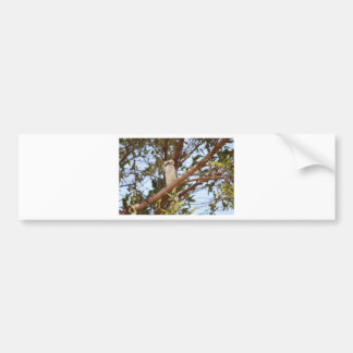 KOOKABURRA IN RURAL QUEENSLAND AUSTRALIA BUMPER STICKER