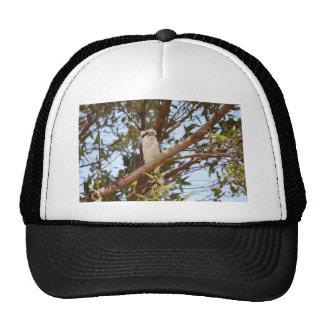 KOOKABURRA IN RURAL QUEENSLAND AUSTRALIA TRUCKER HAT