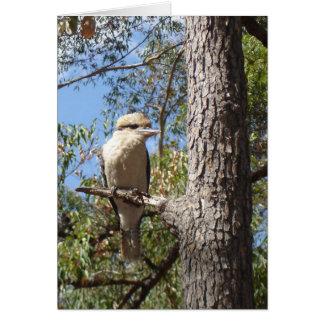 Kookaburra in tree card