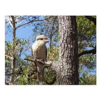 Kookaburra in tree postcard