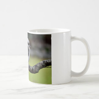 KOOKABURRA ON A BRANCH TASMANIA AUSTRALIA COFFEE MUG