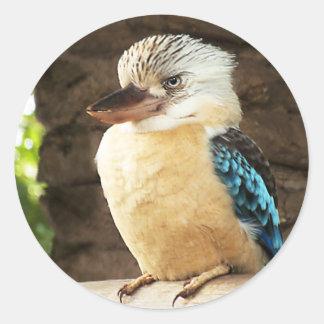 Kookaburra Pegatina Redonda