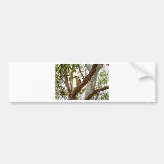 KOOKABURRA RURAL QUEESNALND AUSTRALIA BUMPER STICKER