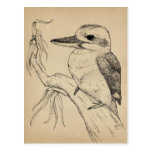 Kookaburra Tarjeta Postal