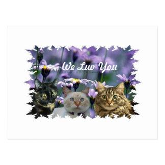 KOOL KATZ, We Luv You Postcard