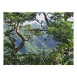 Ko'olau Mountains and Koa trees Poster