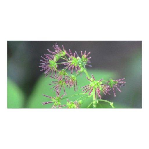 Kooskooskia Idaho Flora Flowers Botany Wildflower Photo Greeting Card