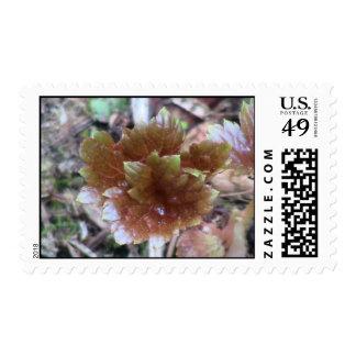 Kooskooskia Idaho Flora Plants Botany Plantae Stamp