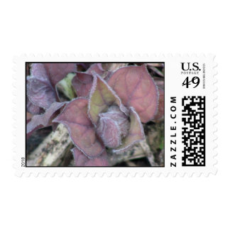 Kooskooskia Idaho Flora Plants Botany Plantae Postage