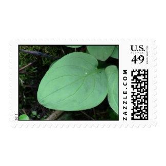Kooskooskia Idaho Flora Plants Botany Plantae Postage Stamp