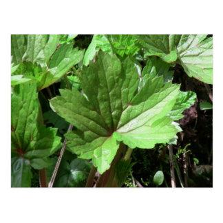 Kooskooskia Idaho Flora Plants Botany Plantae Postcard