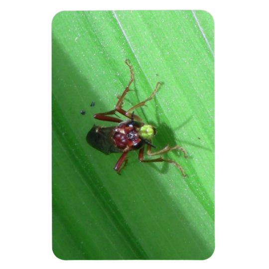 Kooskooskia Idaho Insects Arachnids Spiders Magnet