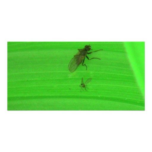 Kooskooskia Idaho Insects Arachnids Spiders Custom Photo Card