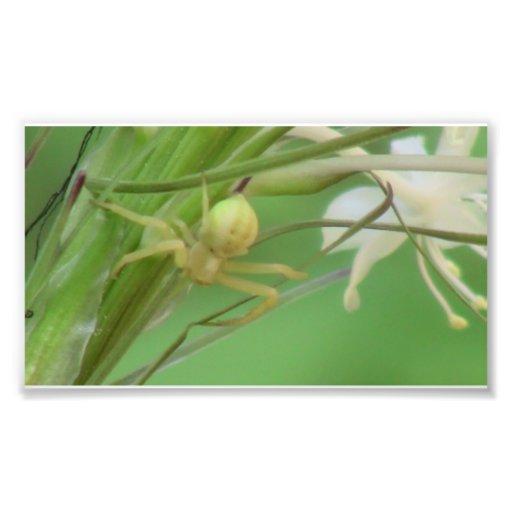 Kooskooskia Idaho Insects Arachnids Spiders Photographic Print