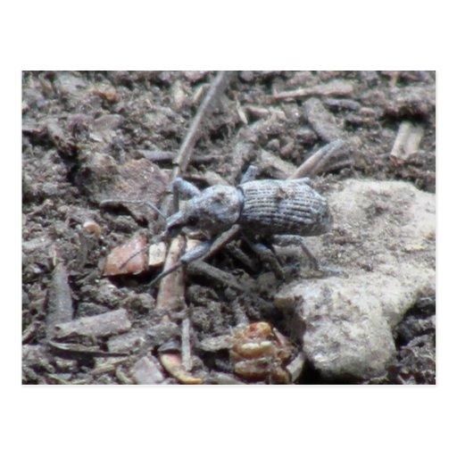 Kooskooskia Idaho Insects Arachnids Spiders Postcard
