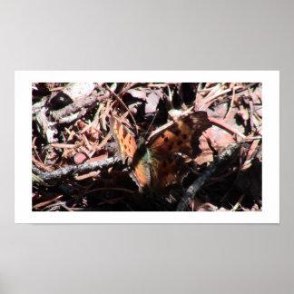 Kooskooskia Idaho Insects Arachnids Spiders Print