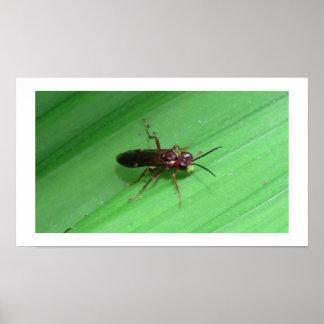 Kooskooskia Idaho Insects Arachnids Spiders Poster