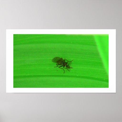 Kooskooskia Idaho Insects Arachnids Spiders Posters