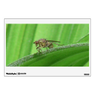 Kooskooskia Idaho Insects Arachnids Spiders Wall Sticker