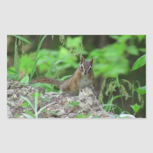 Kooskooskia Idaho Mammals Deer Animals Chipmunk Rectangular Sticker