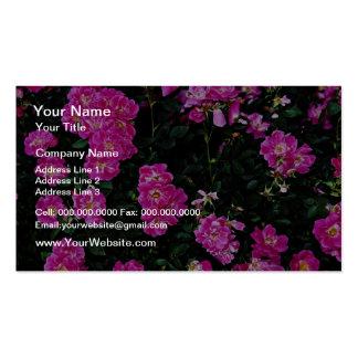 Kordesii Rose William Baffin Yellow flowers Business Card