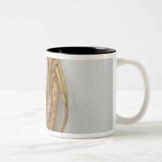 korean food,ginseng Two-Tone coffee mug